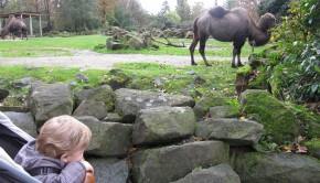 dierentuin, mamablog