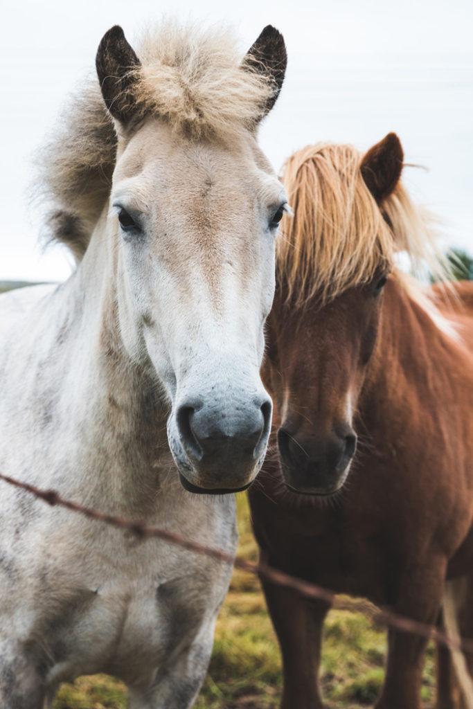 Zwanger en paardrijden, tot hoe lang kun je paardrijden tijdens je zwangerschap