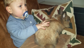wij hebben een konijn, jonge kinderen en dieren, huisdier