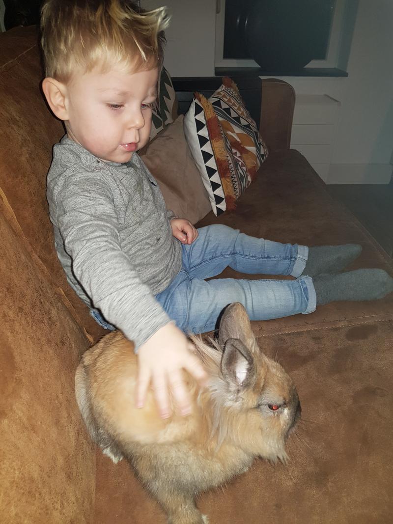 wij hebben een konijn, jonge kinderen en dieren, huisdier nemen?
