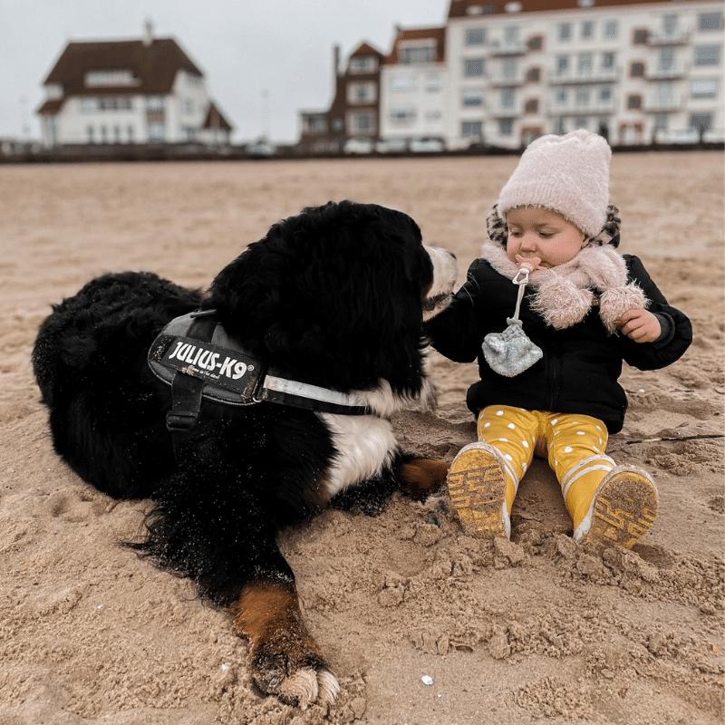 hond als huisdier, huisdier met klein kind, waarom is een huisdier goed, Berner sennen hond